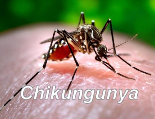 Chikungunya nel Lazio, appello ai donatori modenesi